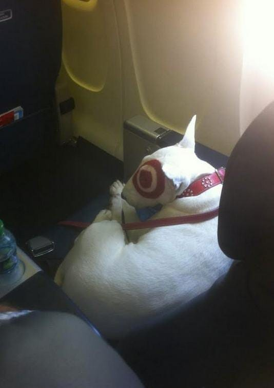 Extremely Amusing Photos Taken In Planes Worldation